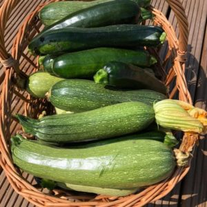 Zucchini (dovlecei)